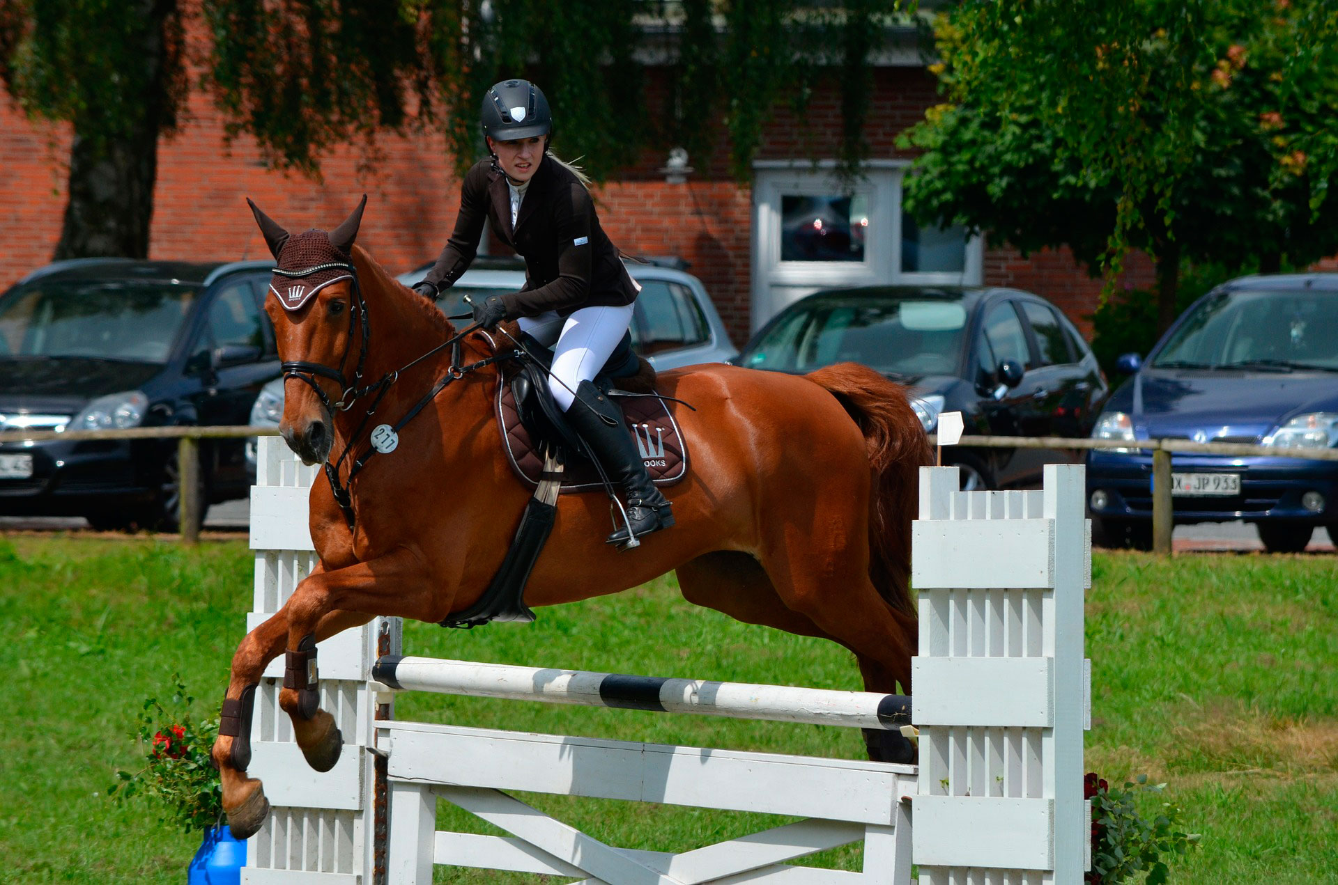 10 Topics To Learn About Show Jumping Part Iv Ampascachi