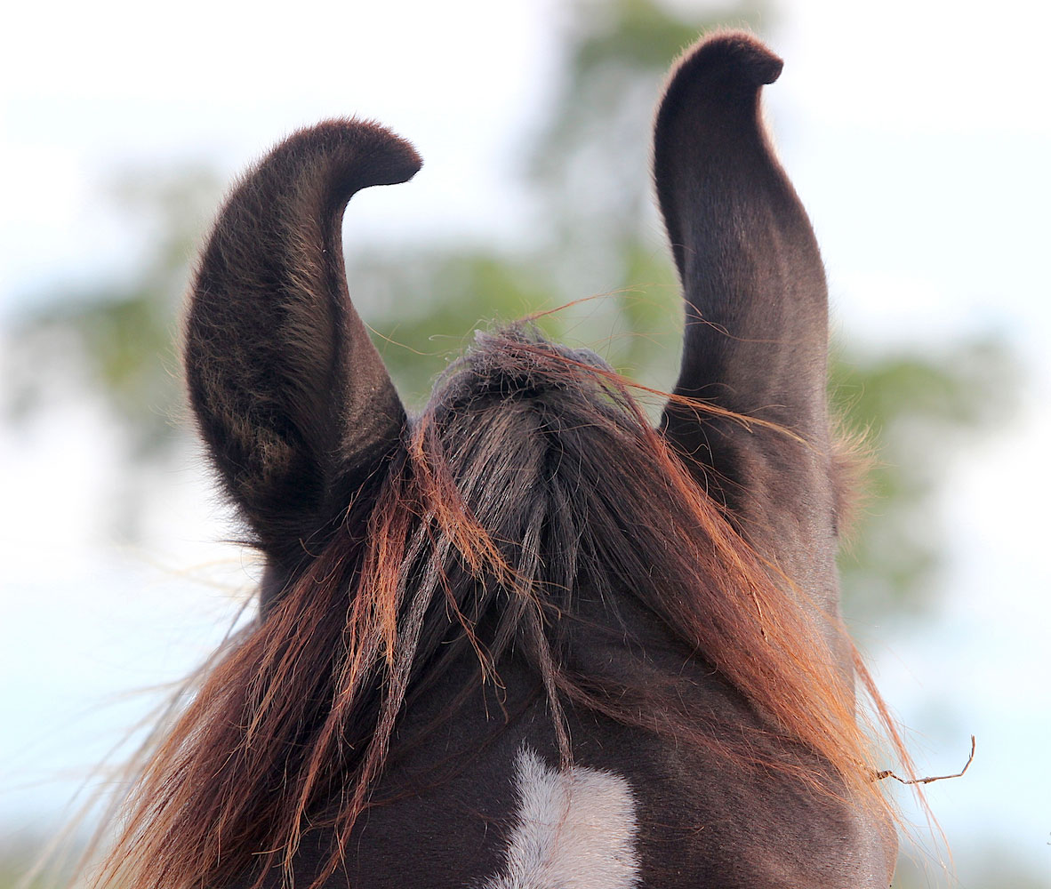 Horse Riding Holidays In India Ampascachi